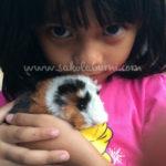 Petting Zoo, Arena Bagi Pecinta Hewan