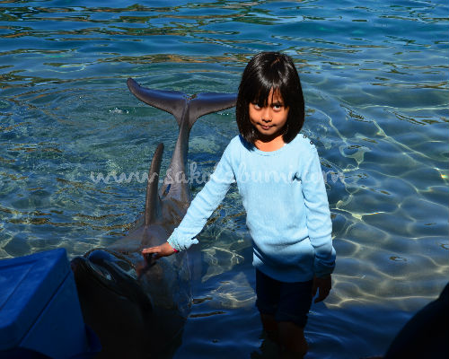 seaworld goldcoast