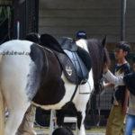 Berkuda dan Memanah di Branchsto, Ranch & Resto
