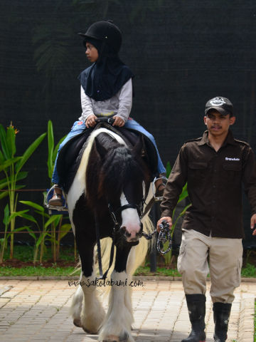 horse riding branchsto