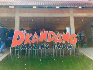 d'kandang amazing farm